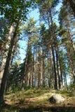 Het Russische bos van het noorden. Stock Foto's