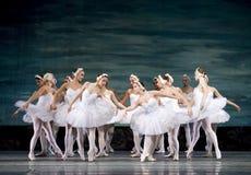 Het Russische koninklijke Meer van het Meer van de ballet perfome Zwaan Stock Afbeelding