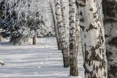 Het Russische landschap van de berkenwinter Royalty-vrije Stock Afbeeldingen