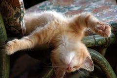 Het rusten kat royalty-vrije stock afbeelding