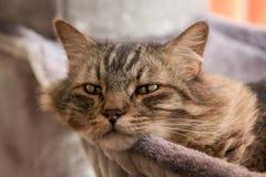 Het rusten kat Royalty-vrije Stock Afbeeldingen