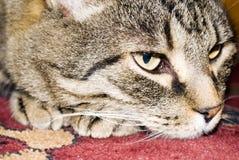 Het rusten kat Stock Foto