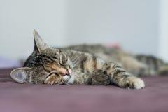Het rusten kat Royalty-vrije Stock Foto's