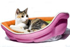 Het rusten kat die kijken aan het recht wordt geïsoleerdn Stock Foto