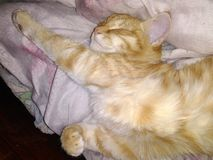 Het rusten kat, die van verplichtingen vrij is royalty-vrije stock foto's