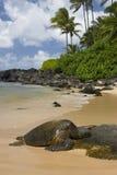Het rusten Schildpad Stock Afbeeldingen