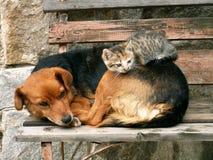 Het rusten van de kat en van de hond Stock Afbeeldingen