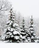 Het rustige bos van de de winterspar Royalty-vrije Stock Fotografie