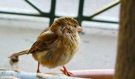 Het ruwe beeld van de vogelclose-up Stock Afbeeldingen