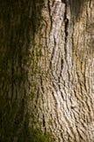 Het ruwe horizontale formaat van de boomschors Stock Afbeeldingen