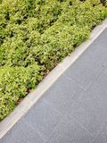 het saldo van de vloertextuur met plant&cement royalty-vrije stock foto