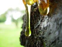 Het sap van de boom Royalty-vrije Stock Afbeeldingen
