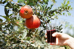 Het sap van de granaatappel stock foto