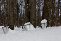Het sap van esdoornbomen Royalty-vrije Stock Fotografie