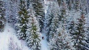 Het satellietbeeld van jong huwelijkspaar die en pretholding lopen hebben dient de pijnboombos van het sneeuwweer tijdens sneeuwv stock video
