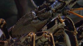 Het schaaldier onderwater kruipen stock video