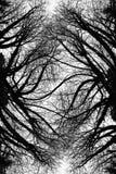 Het scheefgetrokken Art. van Lidmaten Stock Foto's