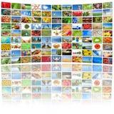 Het scherm dat van TV beelden toont Royalty-vrije Stock Foto's