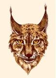 Het schetsen van lynx Stock Fotografie