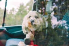 Het schieten van een leuk puppy door het venster stock foto