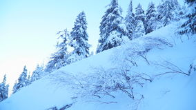 Het schieten van snow-covered bos op een de winterdag in de bergen stock videobeelden