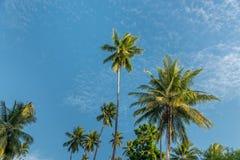 Het schilderachtige bosje van de kokosnotenpalm in tropisch klimaat dichtbij evenaar op Togean-eilanden dichtbij Sulawesi stock fotografie