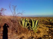 Het schilderachtige Mexicaanse platteland stock afbeelding