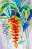 Het schilderen het landschaps originele rode, oranje, gele kleur van de kunstwaterverf van de Heliconia-bloem Stock Foto's