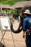 Het schilderen van de olifant art. Stock Foto's