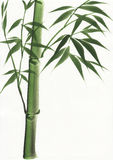 Het schilderen van de waterverf van bamboe Royalty-vrije Stock Fotografie