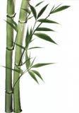 Het schilderen van de waterverf van bamboe