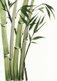 Het schilderen van de waterverf van bamboe Stock Afbeelding