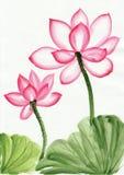 Het schilderen van de waterverf van roze lotusbloembloem Royalty-vrije Stock Foto's