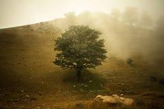 Het schilderen van een boom Royalty-vrije Stock Fotografie