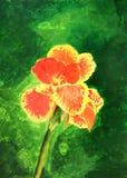 het schilderen van mooie oranjegele cannalelie Royalty-vrije Stock Afbeeldingen