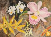 Het schilderen van orchideebloemen vector illustratie