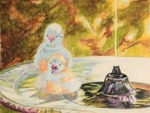 Het schilderen van rood-cheeked cordon bleu-vogels in vogelbad Royalty-vrije Stock Foto's
