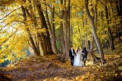 Het schitterende gelukkige jonge jonggehuwdepaar houdt handen terwijl het lopen met de gaspeldoorn langs het de herfstpark Royalty-vrije Stock Fotografie