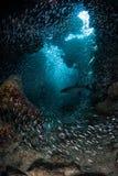 Het scholen van Vissen in Grot royalty-vrije stock afbeelding
