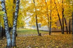 Het schoolgebouw in de herfstbladeren stock afbeelding