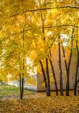 Het schoolgebouw in de herfstbladeren royalty-vrije stock afbeeldingen