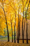 Het schoolgebouw in de herfstbladeren royalty-vrije stock fotografie
