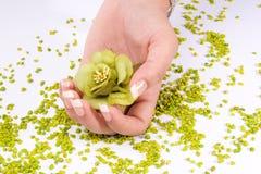 Het schoonheidsmiddel van de vingernagel stock fotografie
