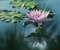 Het schoonheidswater bloeit lilly Stock Afbeeldingen