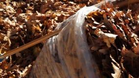 Het schoonmaken van de Herfstbladeren stock video