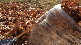 Het schoonmaken van de Herfstbladeren stock videobeelden