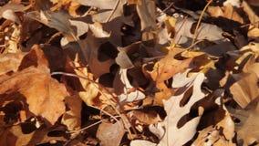 Het schoonmaken van de Herfstbladeren stock footage