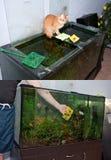 Het schoonmaken van het aquarium Stock Afbeelding
