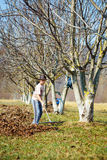 Het schoonmaken van het jonge geitje in een okkernootboomgaard Stock Foto's