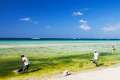 Het schoonmaken van het strand Stock Fotografie